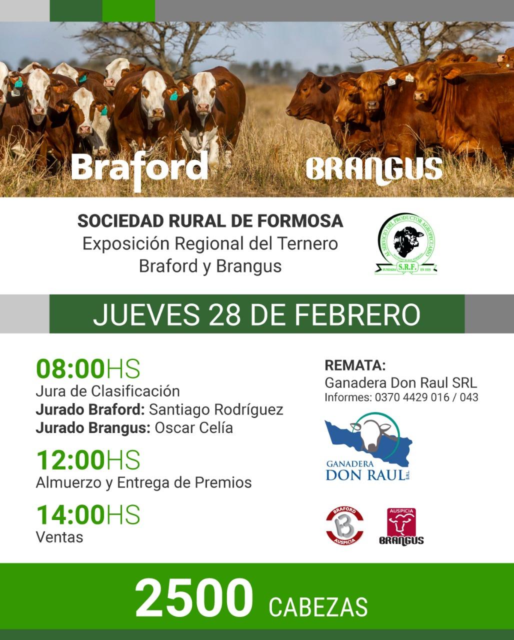 EXPO. REGIONAL DEL TERNERO